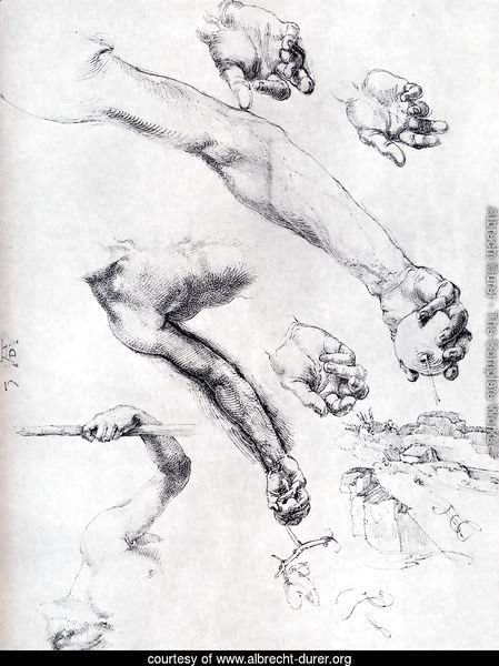 Three Studies From Nature For Adam's Arms In The 1504