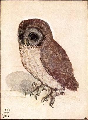 Albrecht Durer - The Little Owl