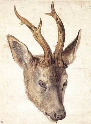 Albrecht Durer - Head of a Stag 2