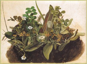Albrecht Durer - The tuft of grass MINOR