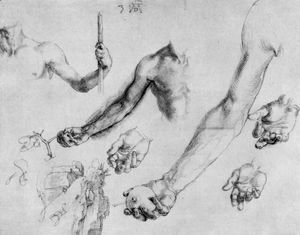 Albrecht Durer - Study of male hands and arms