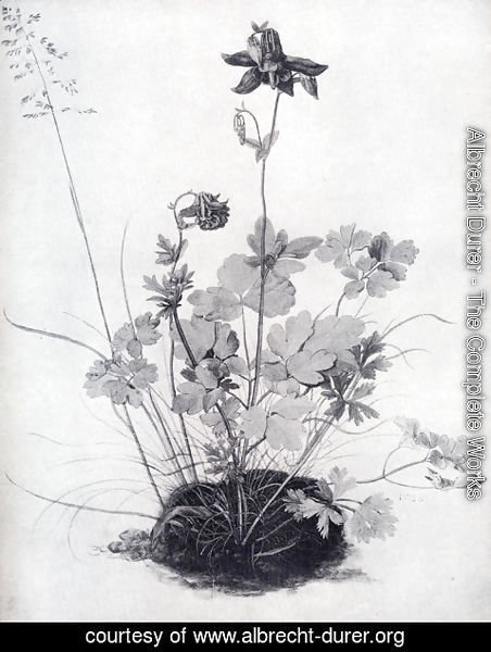 Albrecht Durer - The Piece Of Turf With The Columbine